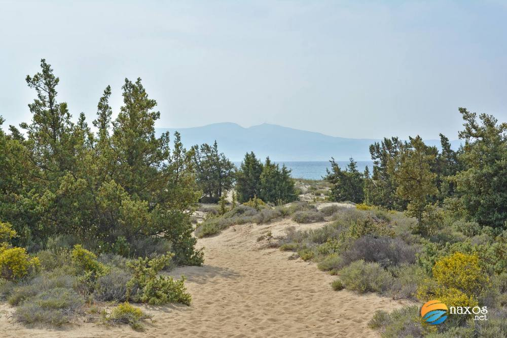 Glyfada beach sand dunes and cedar trees